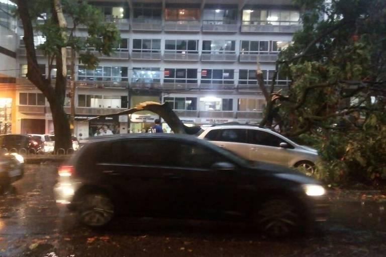 Queda de árvore na av. Getúlio Vargas, região central de Belo Horizonte, após fortes chuvas