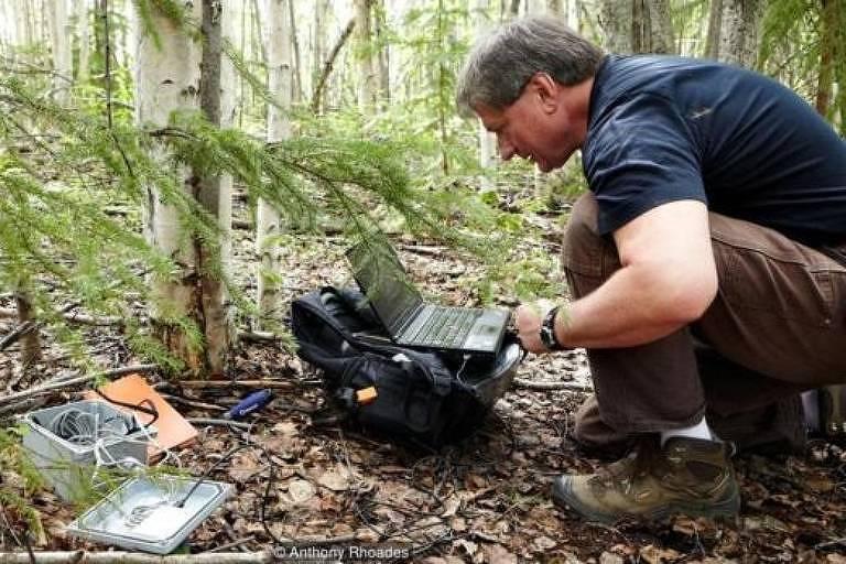 Cientista Vladimir Romanovsky abaixado em meio à floresta e em frente a um notebook analisa registros de temperatura