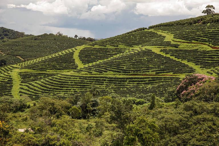Plantação de café na região de Alfenas, no sul de Minas