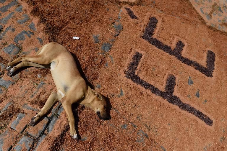 Páscoa canina