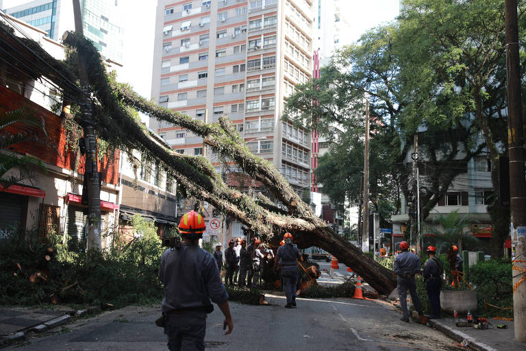 Árvore caída na rua Manuel da Nóbrega, no Paraíso, passa por processo de remoção