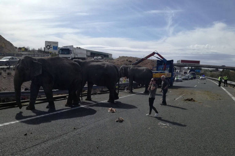 Elefantes soltos na estrada após acidente com caminhão de circo na segunda (2) em Pozo Canada, Espanha