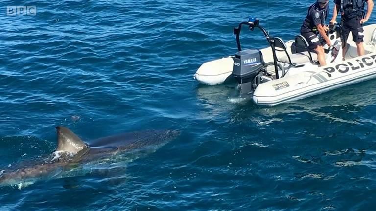 O momento em que policiais descobrem que estão sendo seguidos por um tubarão