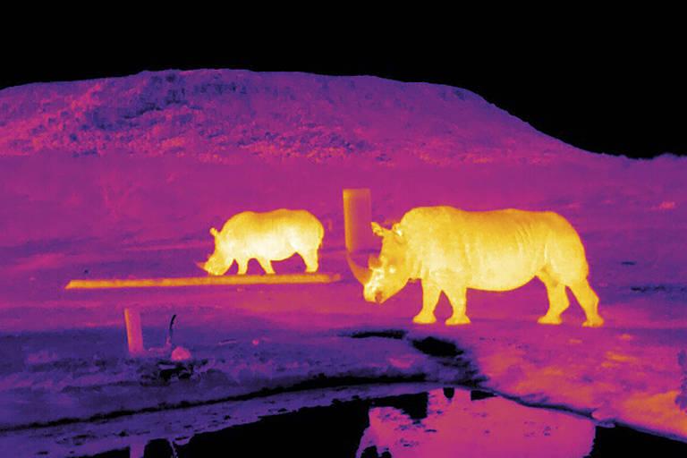 Novas formas de visualizar animais ameaçados