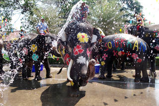 Elephants spray people with water during the celebration of Songkran Water Festival, to commemorate Thailand's New Year in Ayutthaya