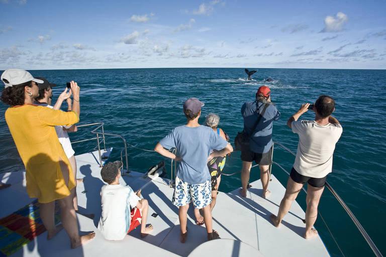 Em primeiro plano, é mostrado um grupo de sete pessoas dentro de um barco de médio porte. Todos estão virados para o mar observando ou fotografando a cauda de uma baleia, ao fundo