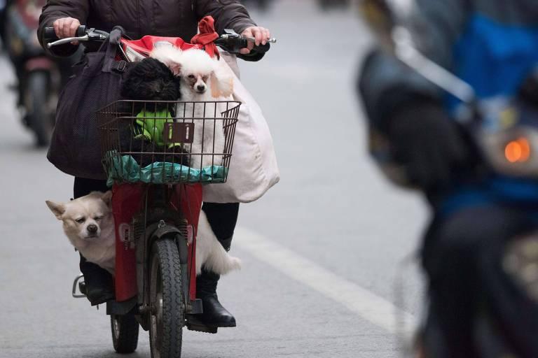 Cães e gatos sofrem tanto quanto humanos com a poluição urbana