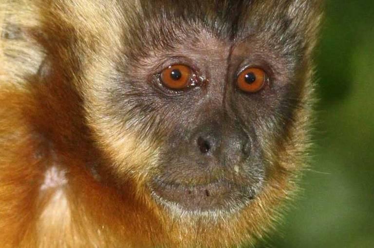 Animais do Cerrado e Pantanal