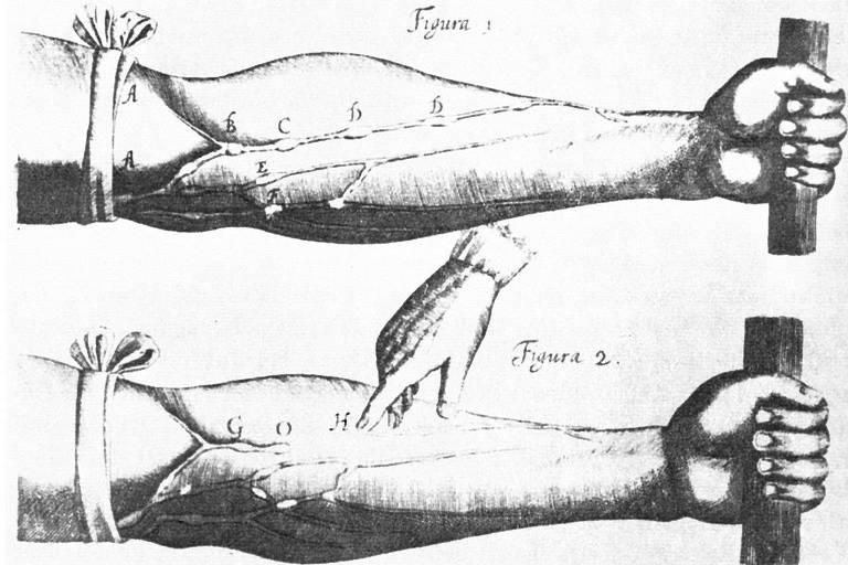 Desenho e estudo de veias