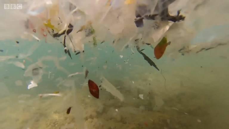 Enzima comedora de plástico