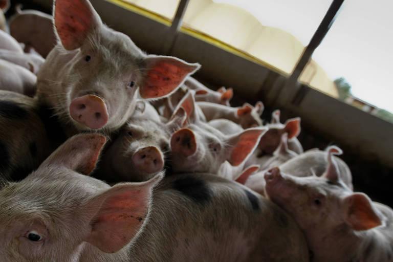 União Europeia planeja vetar carne de frango da BRF