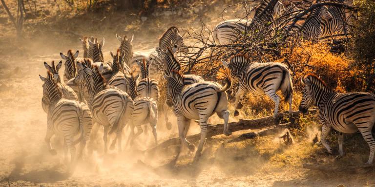 Na natureza de Botsuana
