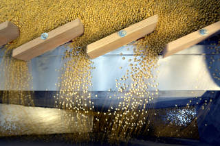 FILE PHOTO: Soybeans being sorted according to their weight and density on a gravity sorter machine at Peterson Farms Seed facility in Fargo