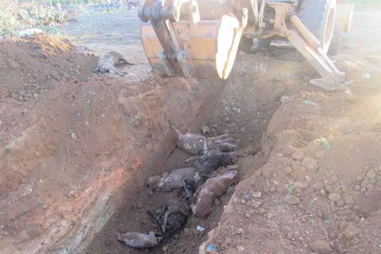 Peritos da Polícia Civil da Paraíba escavam área onde foram enterrados cães, segundo a Promotoria, mortos ilegalmente sem laudo veterinário em Igaracy (PB)