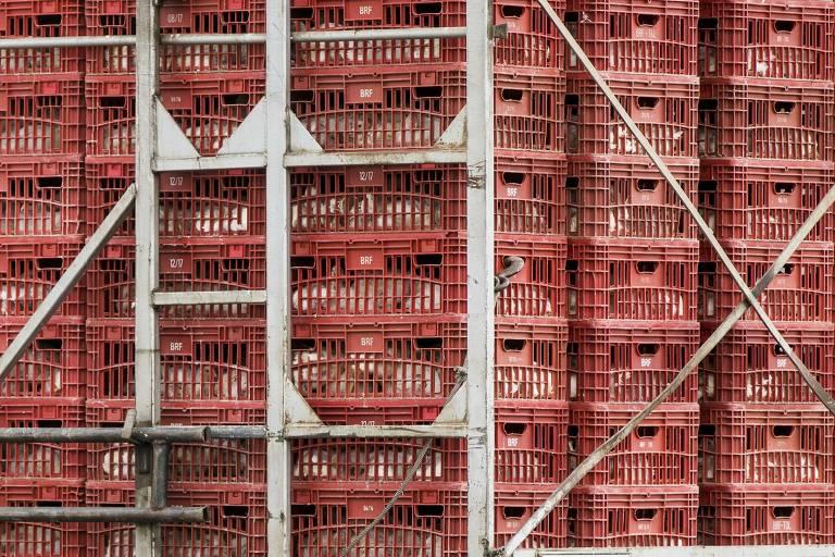 Caminhão com frangos em Carambeí (PR)
