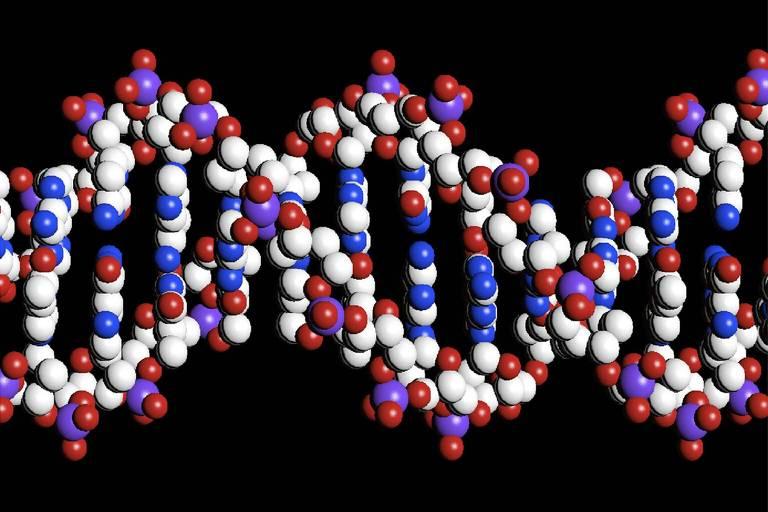 Modelo de estrutura de dupla hélice do DNA (ácido desoxirribonucléico), cadeia molecular que compõe o material genético dos seres vivos; vemos a estrutura conformada de bolinhas azuis, brancas e vermelhas, formando a espiral torcida que representa o DNA