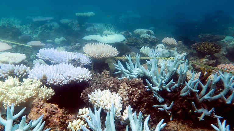 Corais sofrem fenômeno conhecido como branqueamento
