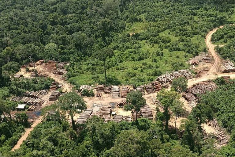 Toras apreendidas pelo Ibama no entorno da Terra Indígena Pirititi, em Roraima.