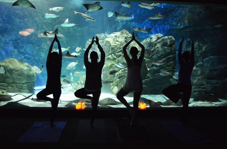 Quatro pessoas fazem pose de ioga em frente a aquário