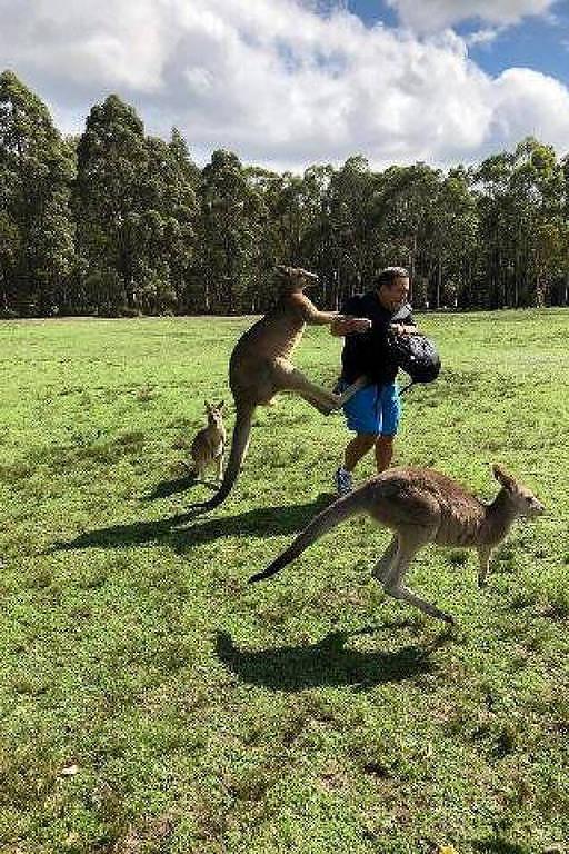 Ataques de cangurus na Austrália