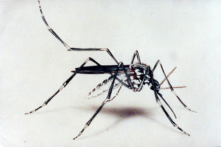 Mosquitos picam mais quando estão com sede, sugere estudo