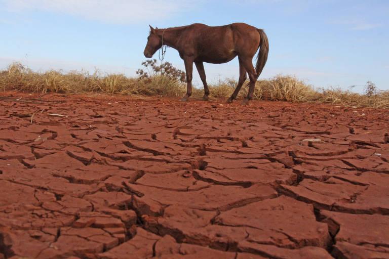 Cavalo em pasto seco em Campo Mourão (PR)