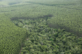Desmatamento no sul da Bahia