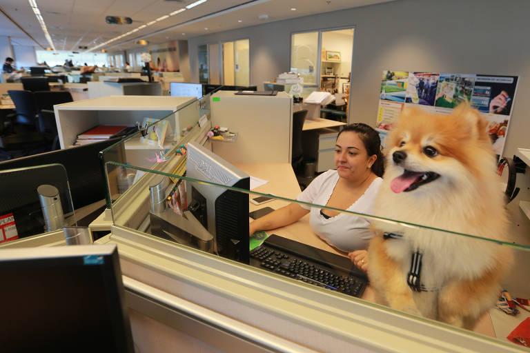Animais de estimação no trabalho
