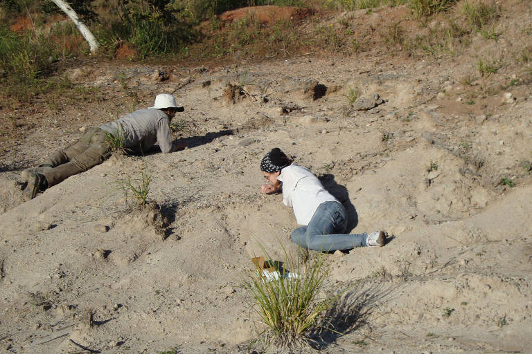 Fósseis curitibanos