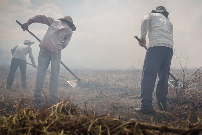 Pequenos agricultores usam fogo para ajudar a limpar o terreno do novo plantio de feijão