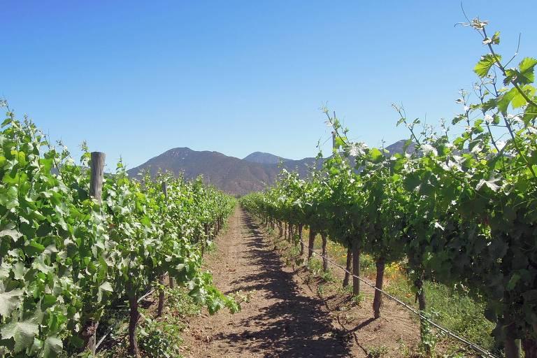 Destino para vinho - Chile