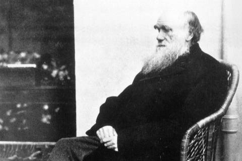O cientista britânico Charles Darwin, em 1875. ***  This 1875 file photo shows Charles Darwin, who, along with Benjamin Franklin, Rev. Martin Luther King Jr., Nicholas Copernicus and Gregor Mendel, was among ``laterborns'', with at least one older sibling. All were revolutionaries. In fact, laterborns are up to 15 times more likely than firstborns to resist authority and break new ground, says Frank J. Sulloway, a research scholar at the Massachusetts Institute of Technology. [AP Photo/File]