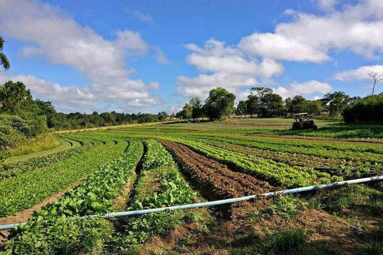 A comunidade de apoio à agroecologia CSA Demétria