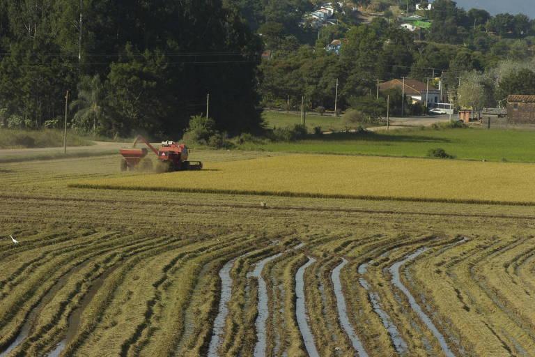 Colheita de arroz, na cidade de Dona Francisca (RS)