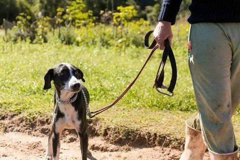 Bombeiros resgatam cachorro que passou seis dias em penhasco em SC