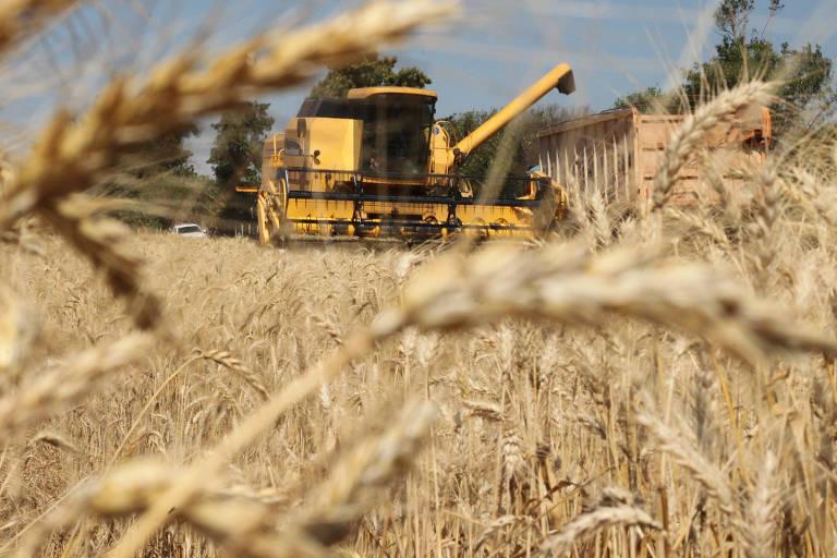 Colheita de trigo no Paraná (PR)