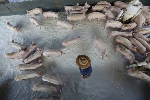 Paralisação causa racha no campo entre produtor de grãos e de carnes