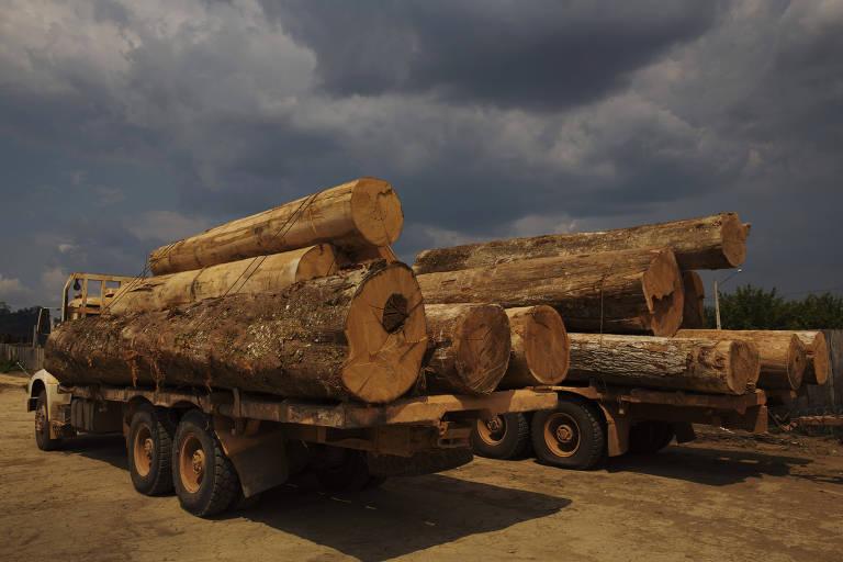 Caminhões com toras de madeira extraídas ilegalmente apreendidas pelo IBAMA na região de Novo Progresso (PA)
