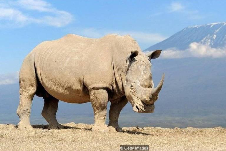 Zoológicos de animais extintos