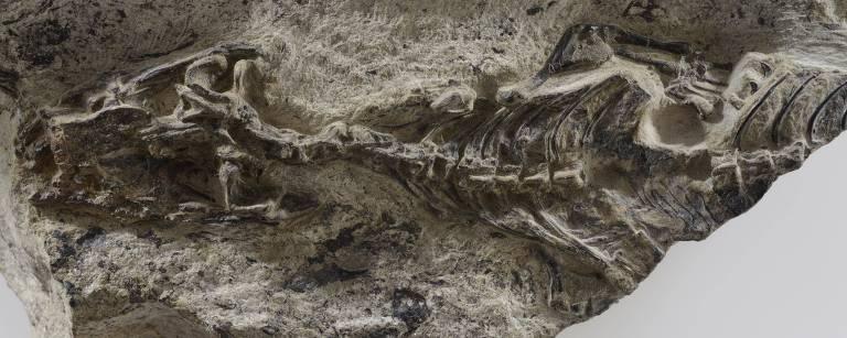 Espécime preservado do réptil Megachirella wachtleri