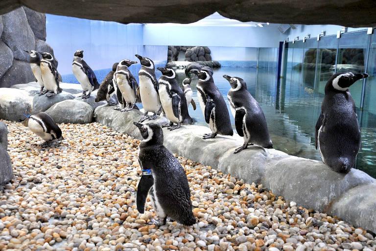 Pinguins da Sabina Escola Parque do Conhecimento
