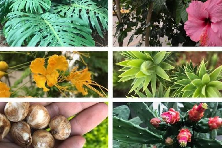 Várias plantas comuns em cidades têm partes comestíveis