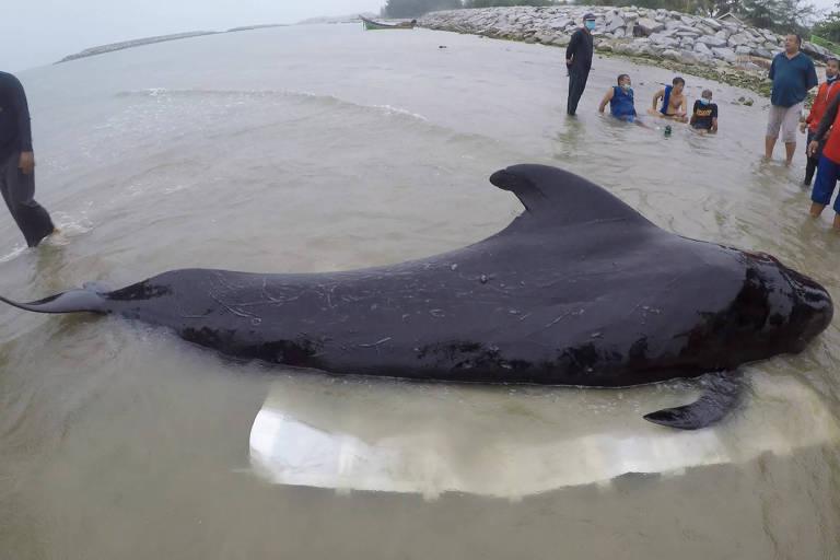 Baleia na areia, beira do mar