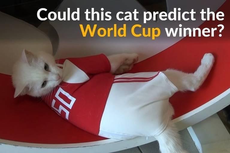 O gato Achilles promete adivinhar resultados da Copa do Mundo