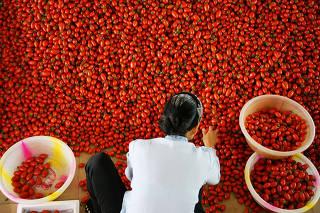 (3)CHINA-YUNNAN-AGRICULTURA