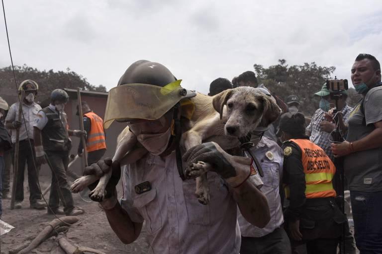 Cães resgatados na Guatemala