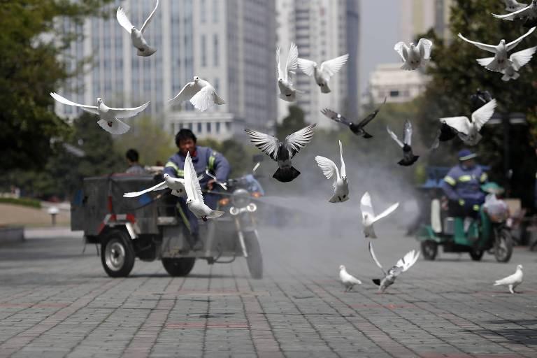 Pombos pelo mundo