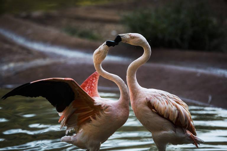 Casais animais