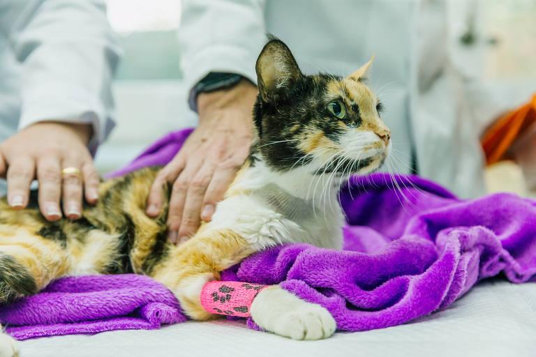 Hospital 4cats