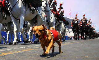A dog mascot of the Italian elite military unit Cuirassiers' Regiment is seen during the Republic Day military parade in Rome